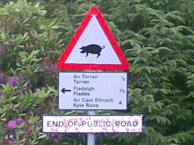 pig at the end of the road