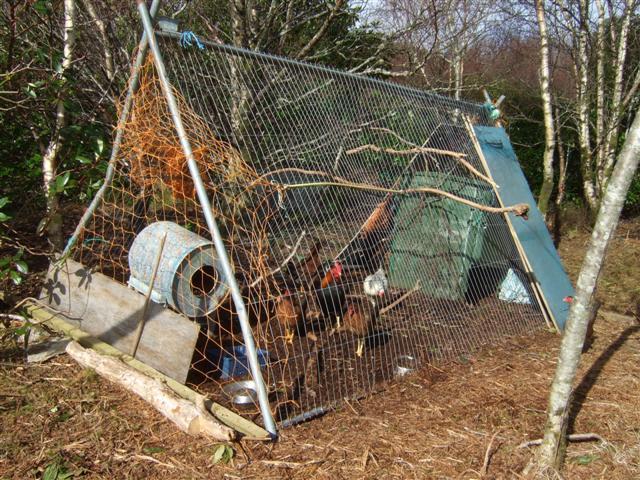 first henhouse