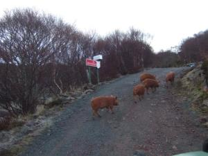 No unautherised pigs