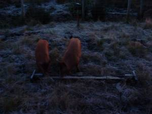 Rory and Ruby's first frost