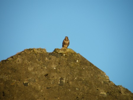 Buzzard on mine building