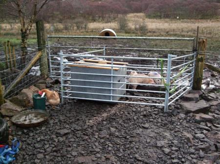3 piglets, 3 hurdles, 2 ratchet straps and 1 gate!