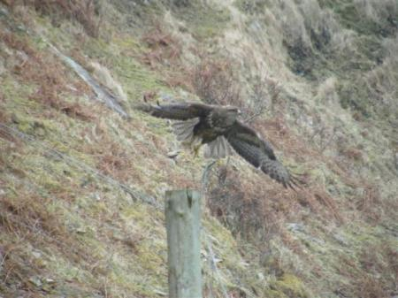 Buzzard off post