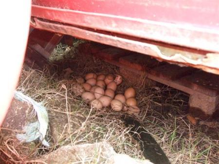 21 eggs!