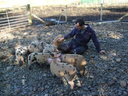 Quality pig time!