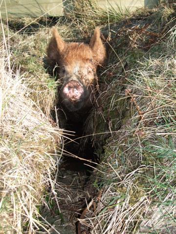 Bramble in a ditch 17'04/09