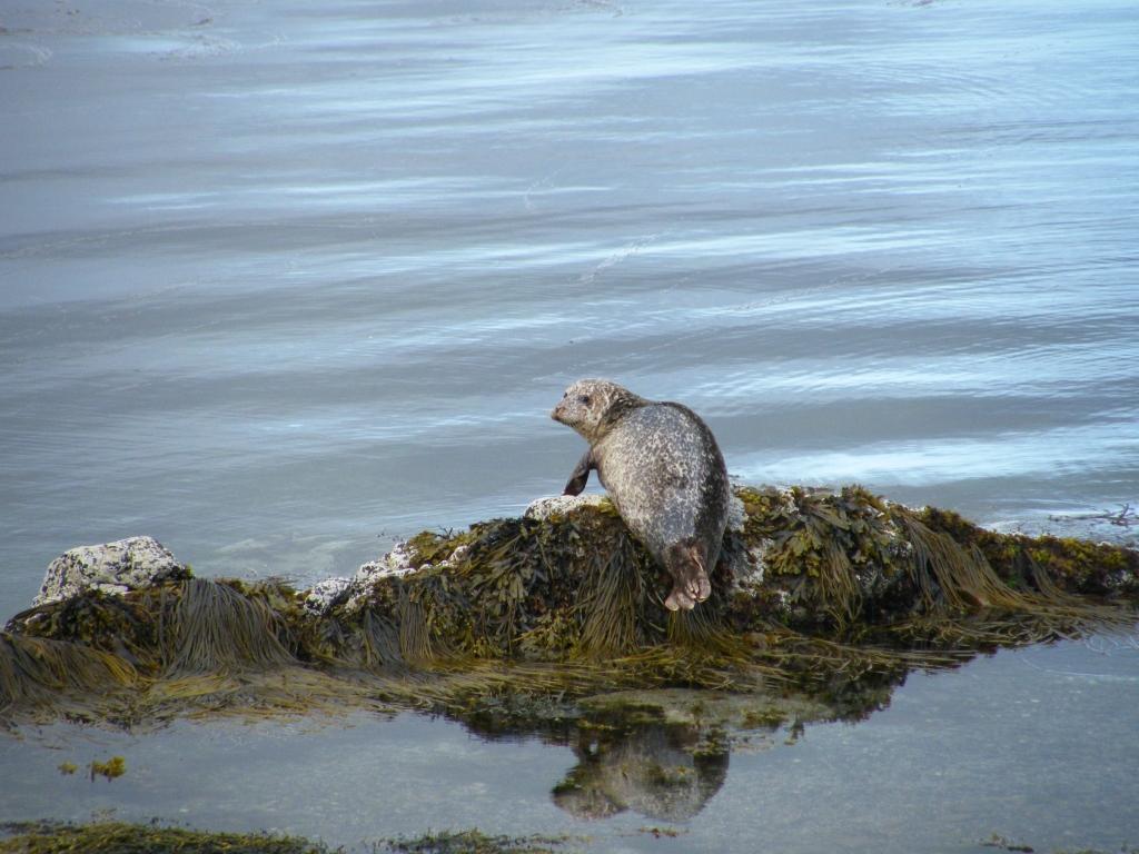 Sammy seal