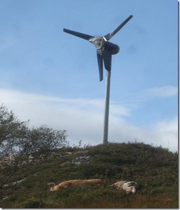 turbine and pigs