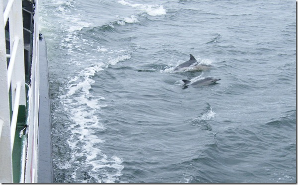 large and little dolphin