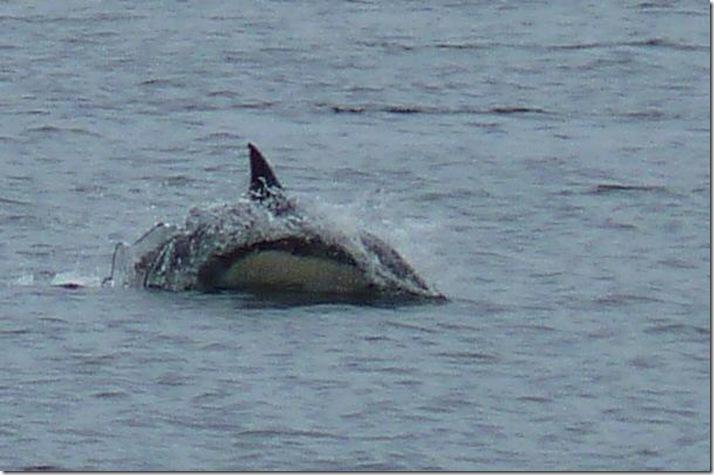 dolphin 0208 2