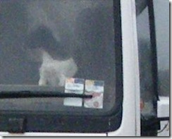 wee dug in truck