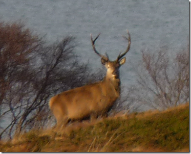 090112 stag
