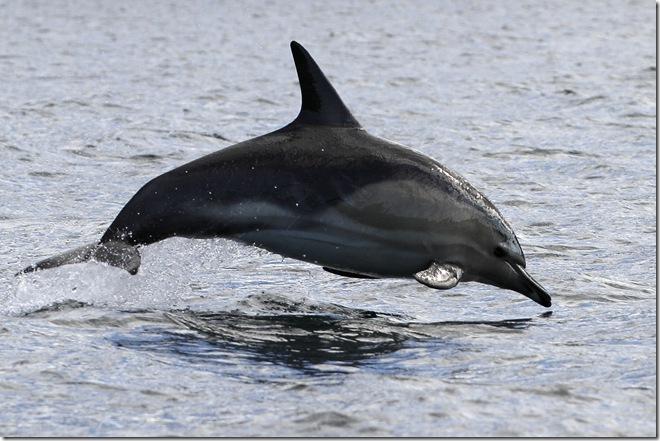 dolph2